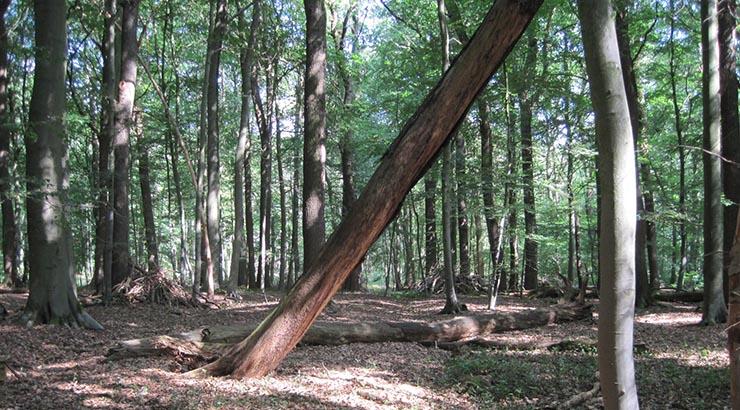Den Wald ruhen lassen